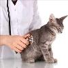 Ветеринарные клиники в Гороховце